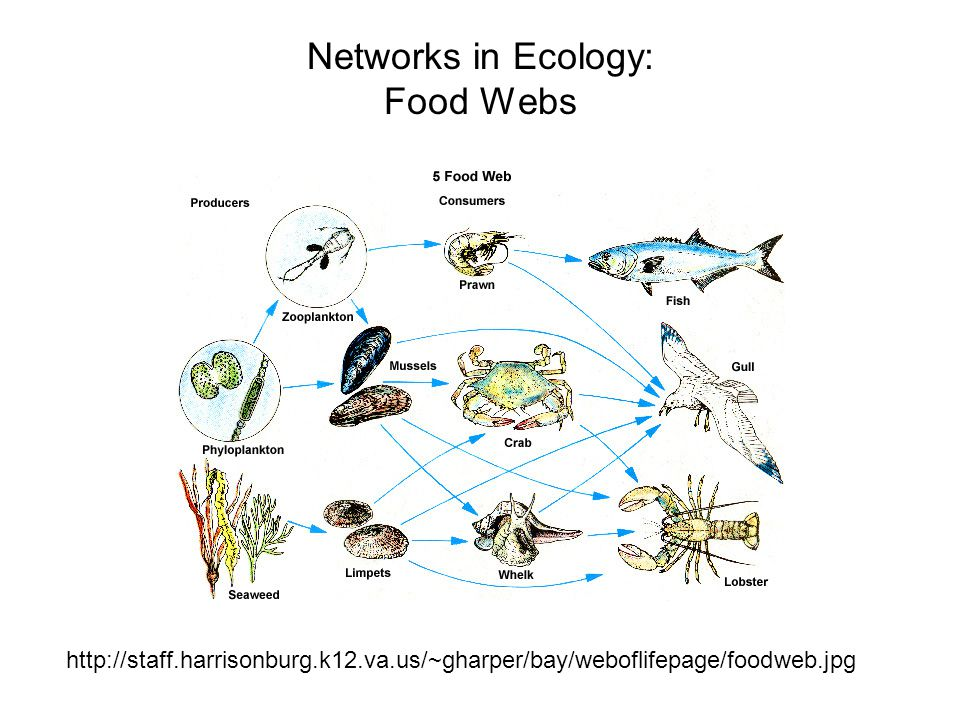 Networks in Ecology: Food Webs http://staff.harrisonburg.k12.va.us/~gharper/bay/weboflifepage/foodweb.jpg