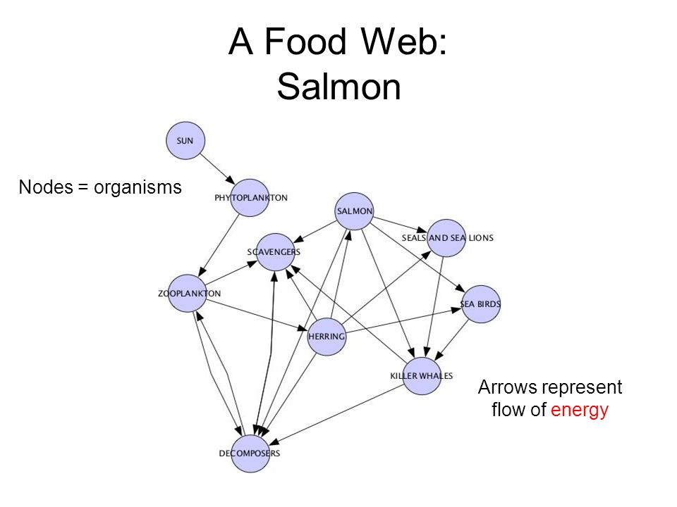 A Food Web: Salmon Nodes = organisms Arrows represent flow of energy