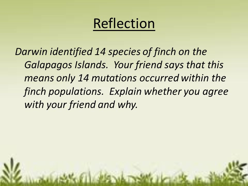 Summary What did you think about the role mutations play in natural selection before this lesson? What did you learn about the role mutations play in