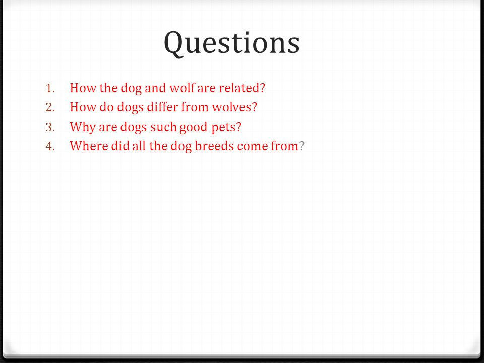 Questions 1.How the dog and wolf are related. 2. How do dogs differ from wolves.