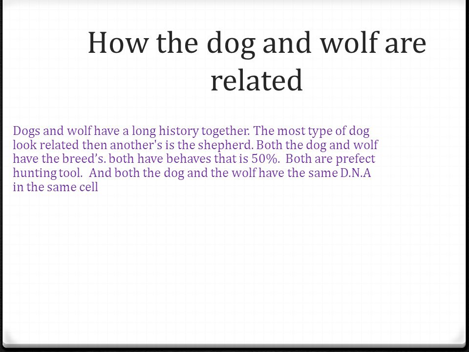 How the dog and wolf are related Dogs and wolf have a long history together.