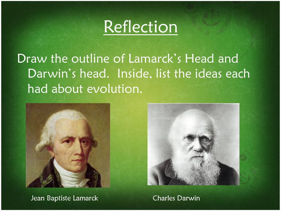 Reflection Draw the outline of Lamarck's Head and Darwin's head. Inside, list the ideas each had about evolution. Jean Baptiste LamarckCharles Darwin