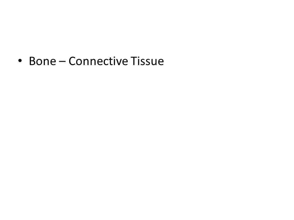 Bone – Connective Tissue
