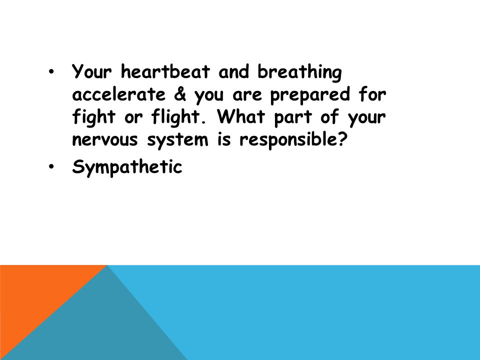 Your heartbeat and breathing accelerate & you are prepared for fight or flight. What part of your nervous system is responsible? Sympathetic