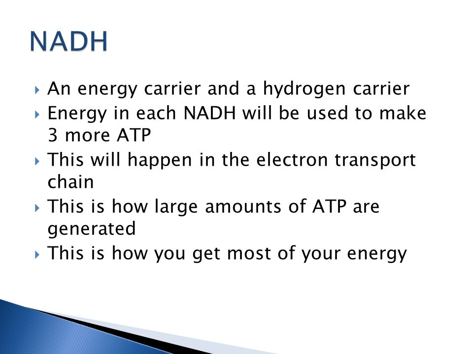  An energy carrier and a hydrogen carrier  Energy in each NADH will be used to make 3 more ATP  This will happen in the electron transport chain  This is how large amounts of ATP are generated  This is how you get most of your energy
