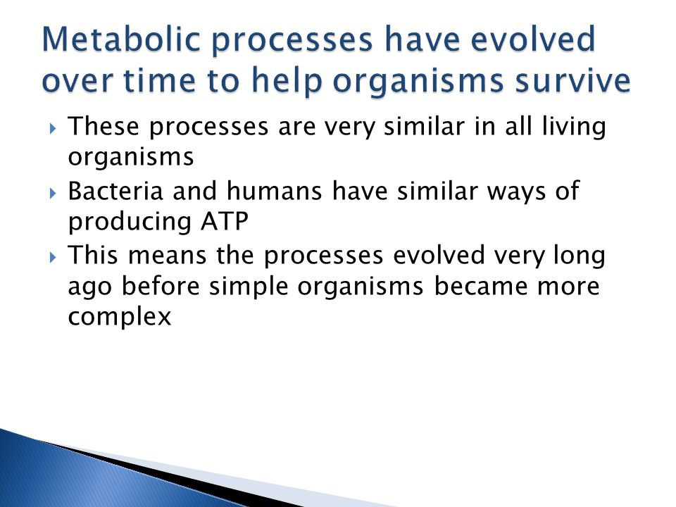  These processes are very similar in all living organisms  Bacteria and humans have similar ways of producing ATP  This means the processes evolved very long ago before simple organisms became more complex