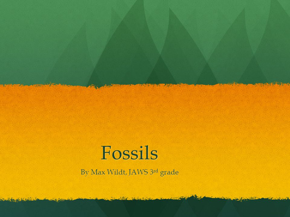 Fossils By Max Wildt, JAWS 3 rd grade