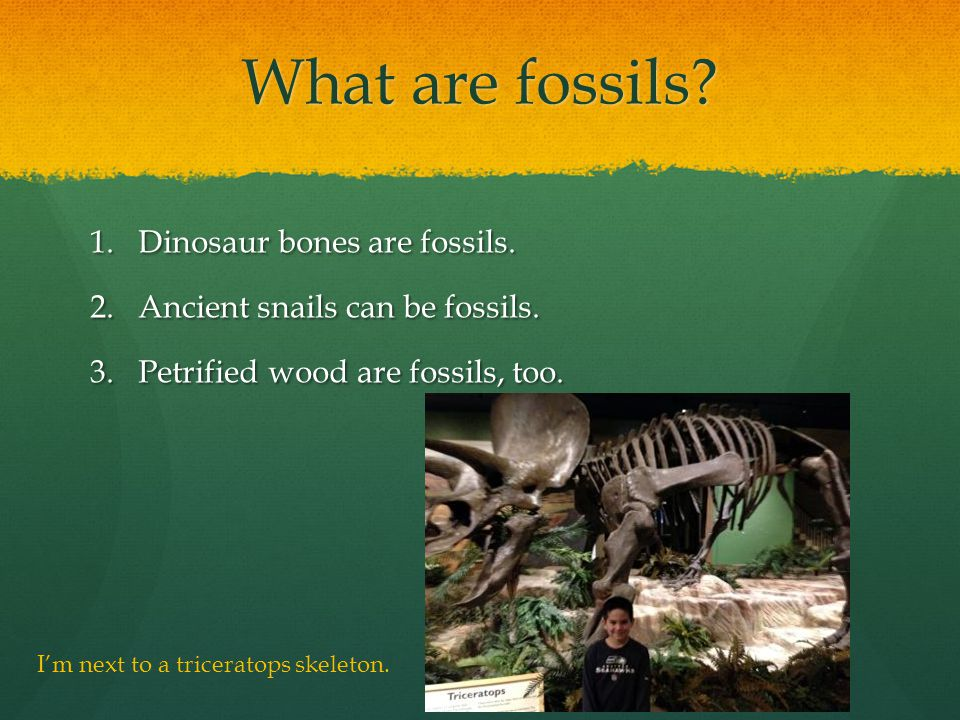 What are fossils. 1.Dinosaur bones are fossils. 2.Ancient snails can be fossils.