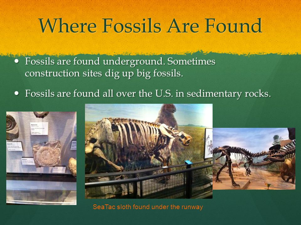 Where Fossils Are Found Fossils are found underground.