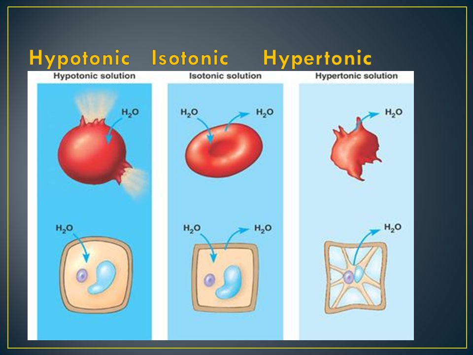Hypotonic: Concentration of water INSIDE cell is greater Isotonic: Concentration of water is EQUAL Hypertonic: Concentration of water OUTSIDE cell is