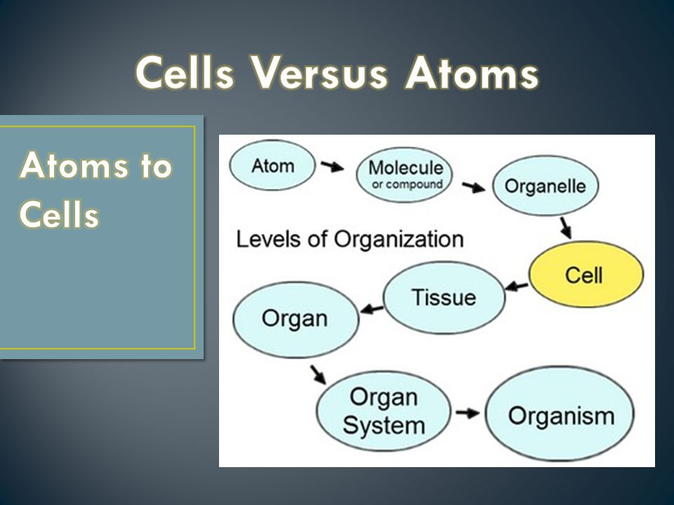How are cells and atoms related.