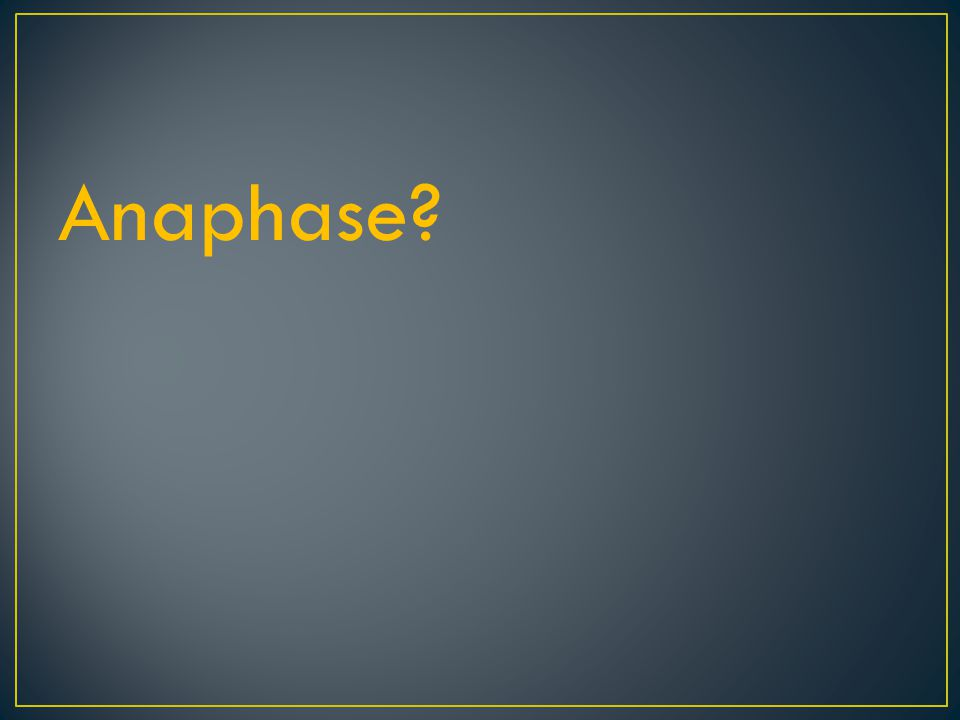 Metaphase: Doubled chromosomes line up Cytoplasmic fibers are now attached to each doubled chromosome at the centromere
