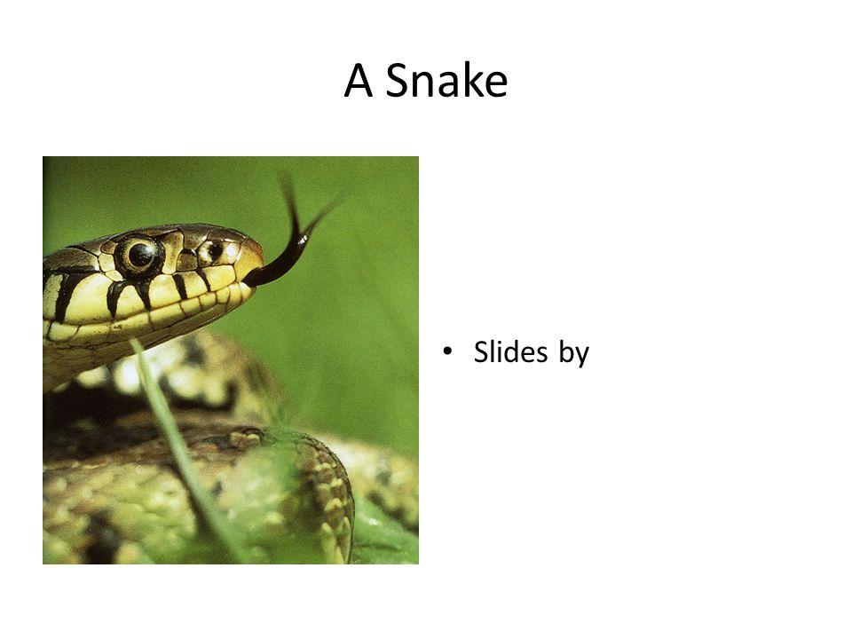 A Snake Slides by