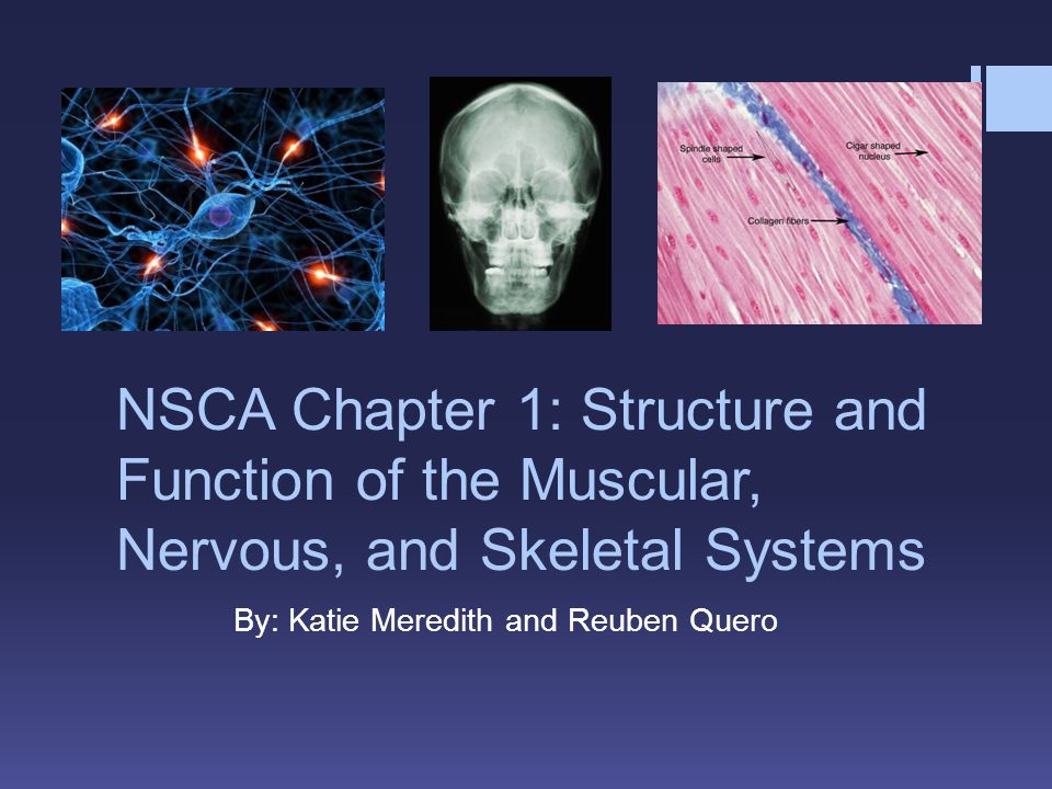 NSCA Chapter 1: Structure and Function of the Muscular, Nervous, and Skeletal Systems By: Katie Meredith and Reuben Quero