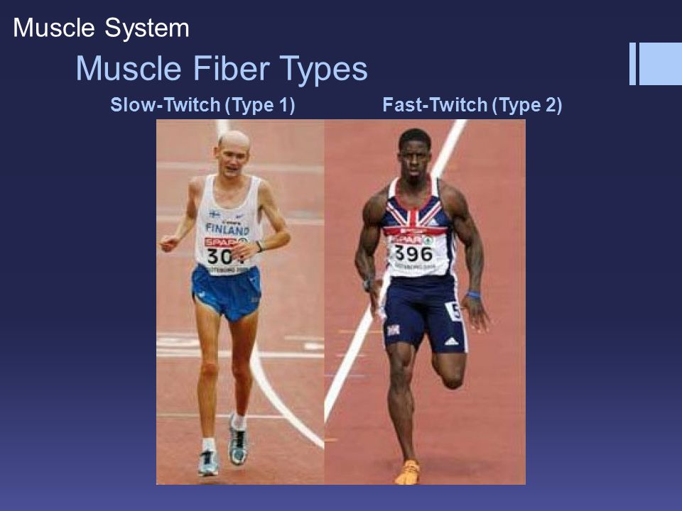 Fast-Twitch (Type 2) Slow-Twitch (Type 1) Muscle Fiber Types Muscle System