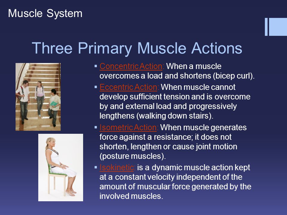Three Primary Muscle Actions  Concentric Action: When a muscle overcomes a load and shortens (bicep curl).  Eccentric Action: When muscle cannot dev