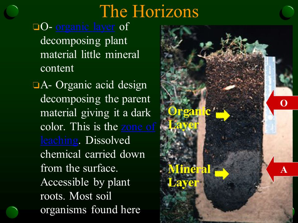 The Horizons o O- organic layer of decomposing plant material little mineral content o A- Organic acid design decomposing the parent material giving i