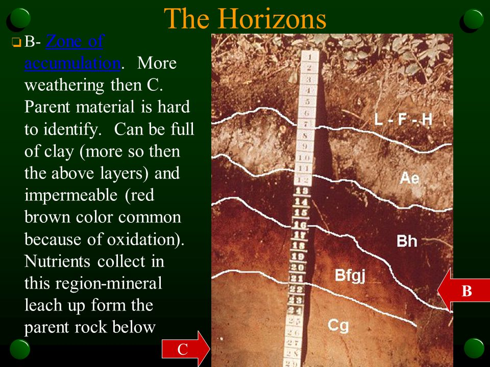 The Horizons o B- Zone of accumulation. More weathering then C. Parent material is hard to identify. Can be full of clay (more so then the above layer