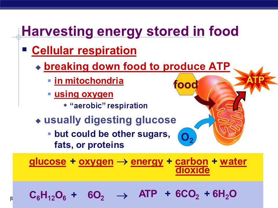 Regents Biology 2009-2010 ATP What is energy in biology? Adenosine TriPhosphate