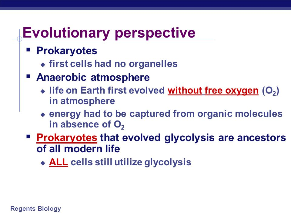 """Regents Biology Glycolysis glucose      pyruvate 2x2x 6C3C  Breaking down glucose  """"glyco – lysis"""" (splitting sugar)  ancient pathway which ha"""