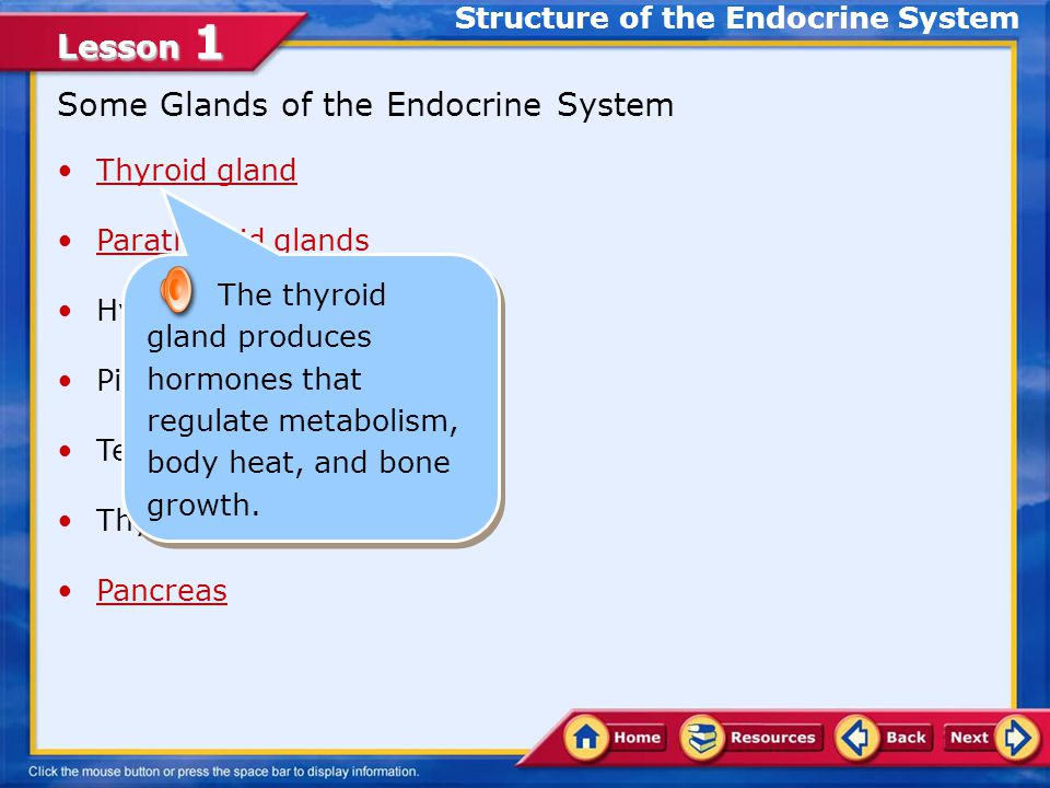 Lesson 1 Adrenal Glands Structure of the Endocrine System The adrenal medulla is controlled by the hypothalamus and the autonomic nervous system. It s