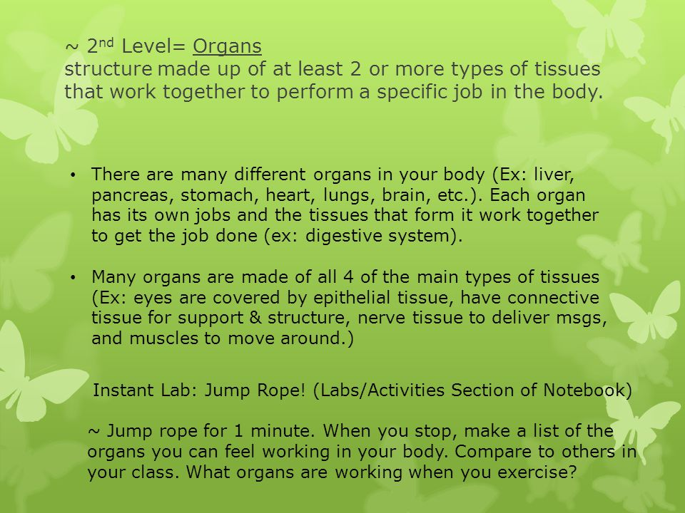 ~ 2 nd Level= Organs structure made up of at least 2 or more types of tissues that work together to perform a specific job in the body. There are many