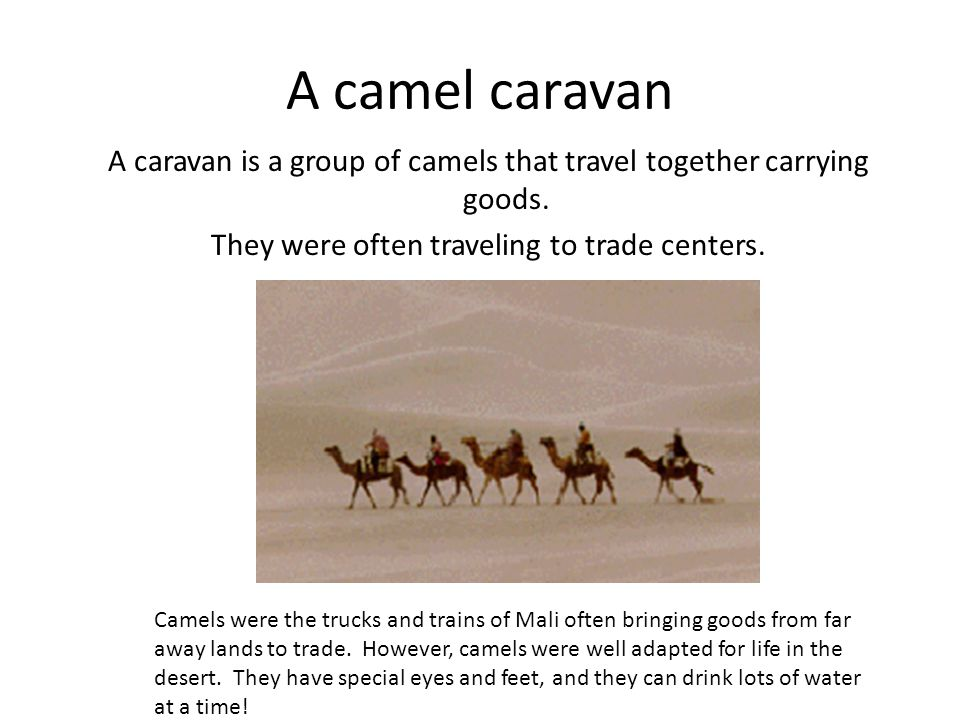 A camel caravan A caravan is a group of camels that travel together carrying goods. They were often traveling to trade centers. Camels were the trucks