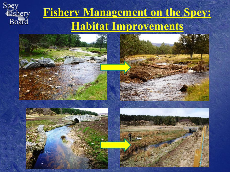 Fishery Management on the Spey: Habitat Improvements