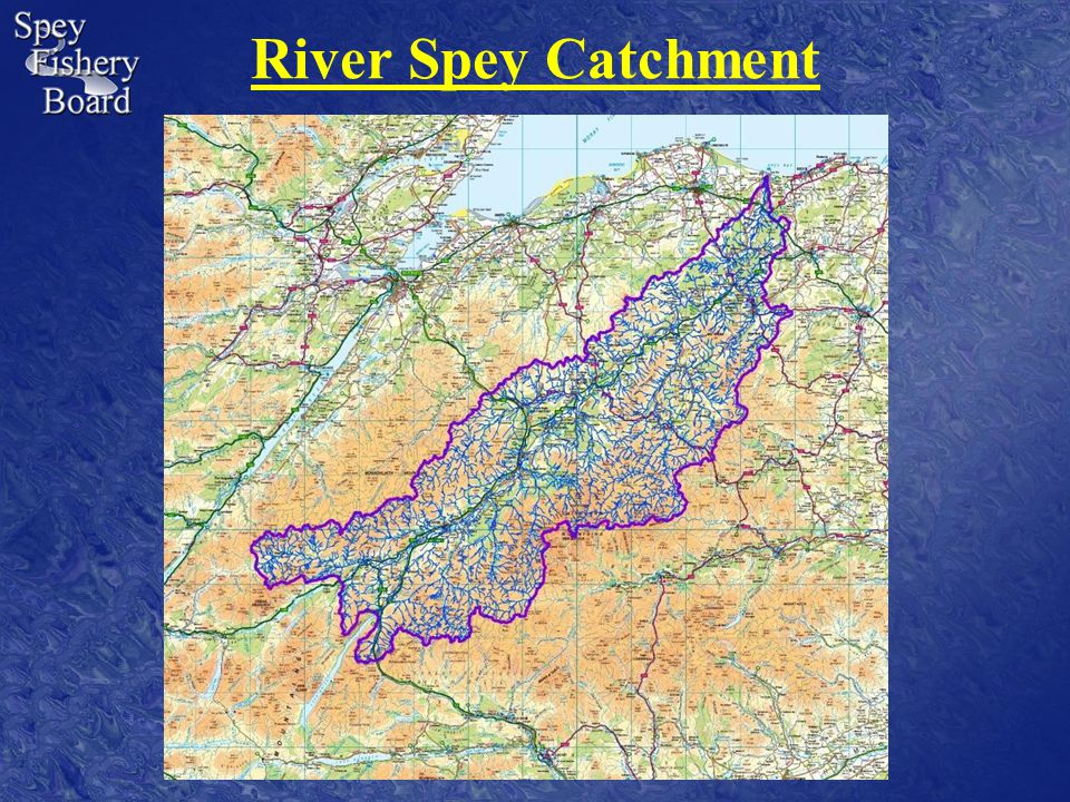 Management Implications for Stocking on the Spey Fishery management is not only based upon sound science; politics and common sense also play important parts.