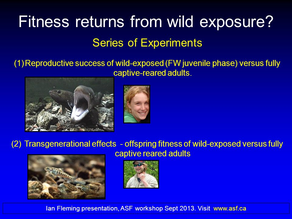 Series of Experiments (1)Reproductive success of wild-exposed (FW juvenile phase) versus fully captive-reared adults.