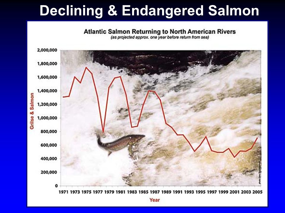 Declining & Endangered Salmon