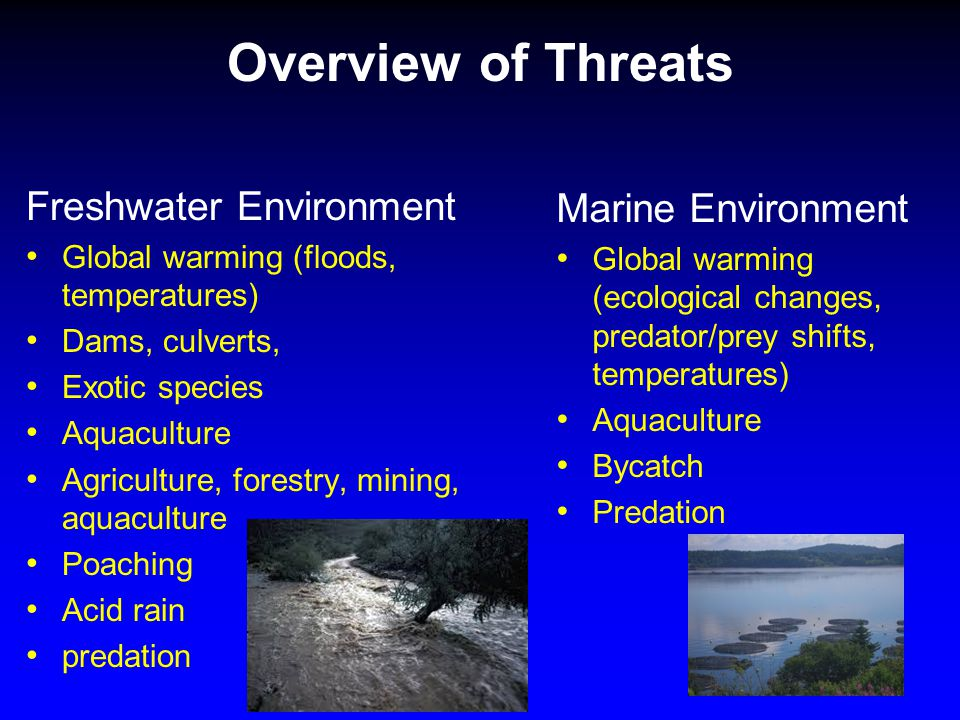 Overview of Threats Freshwater Environment Global warming (floods, temperatures) Dams, culverts, Exotic species Aquaculture Agriculture, forestry, mining, aquaculture Poaching Acid rain predation Marine Environment Global warming (ecological changes, predator/prey shifts, temperatures) Aquaculture Bycatch Predation