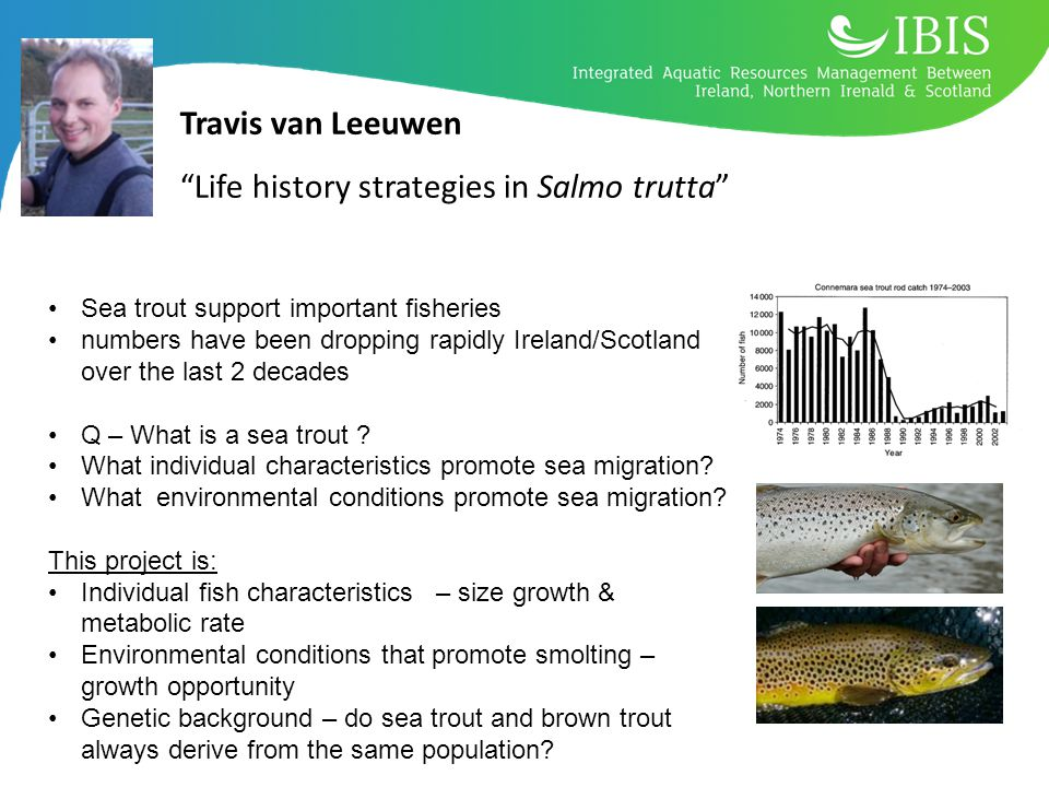Travis van Leeuwen Life history strategies in Salmo trutta Sea trout support important fisheries numbers have been dropping rapidly Ireland/Scotland over the last 2 decades Q – What is a sea trout .