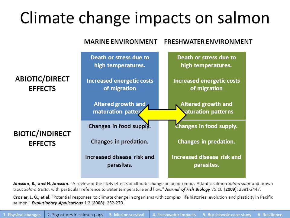 Climate change impacts on salmon MARINE ENVIRONMENTFRESHWATER ENVIRONMENT ABIOTIC/DIRECT EFFECTS BIOTIC/INDIRECT EFFECTS Death or stress due to high temperatures.