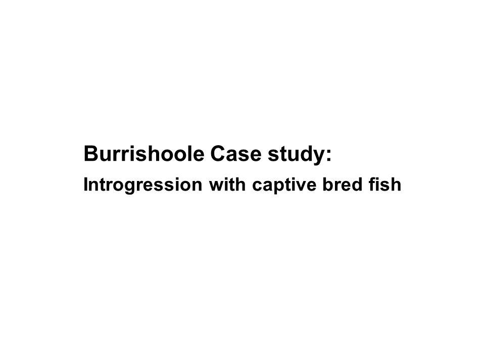 Burrishoole Case study: Introgression with captive bred fish