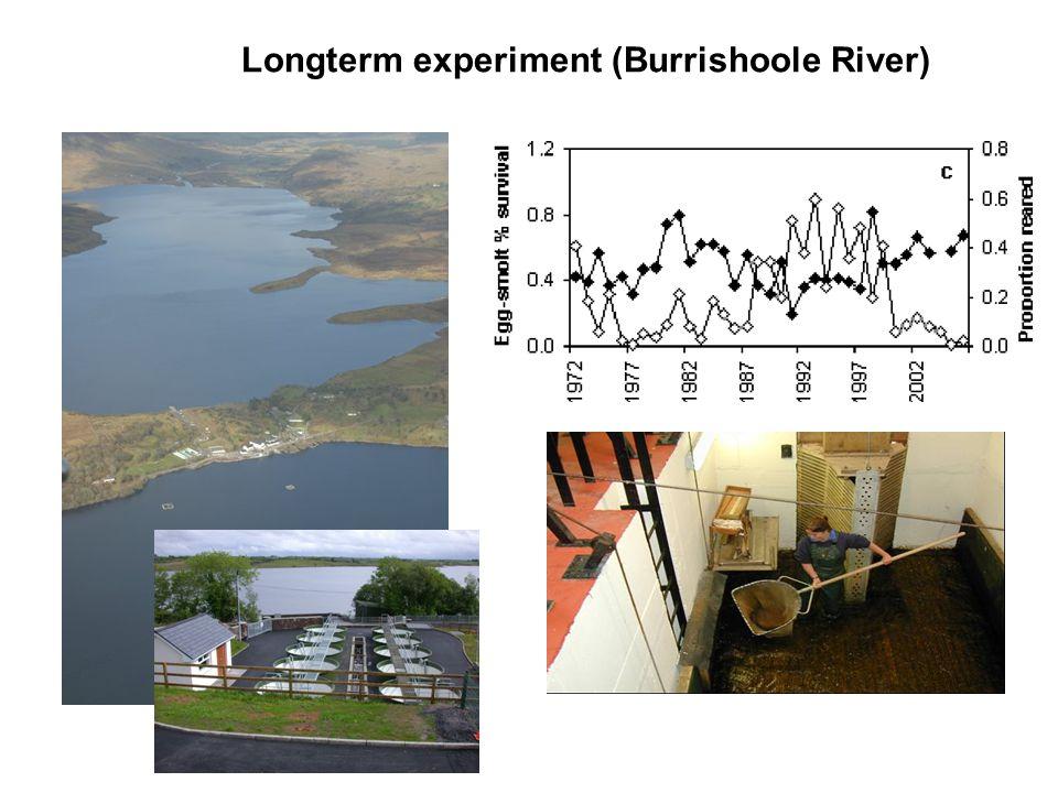 Longterm experiment (Burrishoole River)