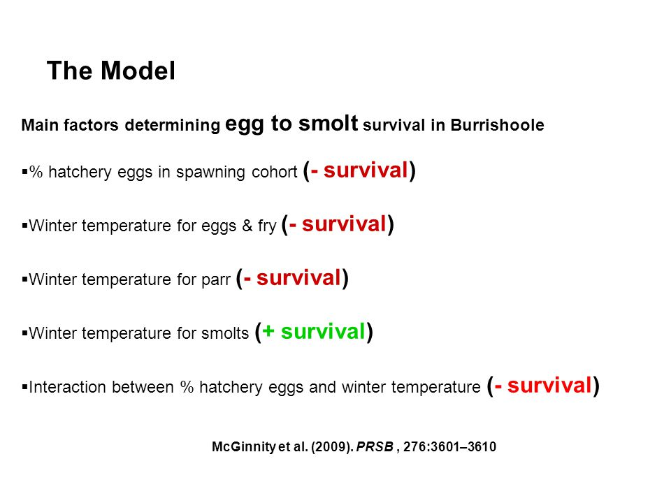 The Model Main factors determining egg to smolt survival in Burrishoole  % hatchery eggs in spawning cohort (- survival)  Winter temperature for eggs & fry (- survival)  Winter temperature for parr (- survival)  Winter temperature for smolts (+ survival)  Interaction between % hatchery eggs and winter temperature (- survival) McGinnity et al.