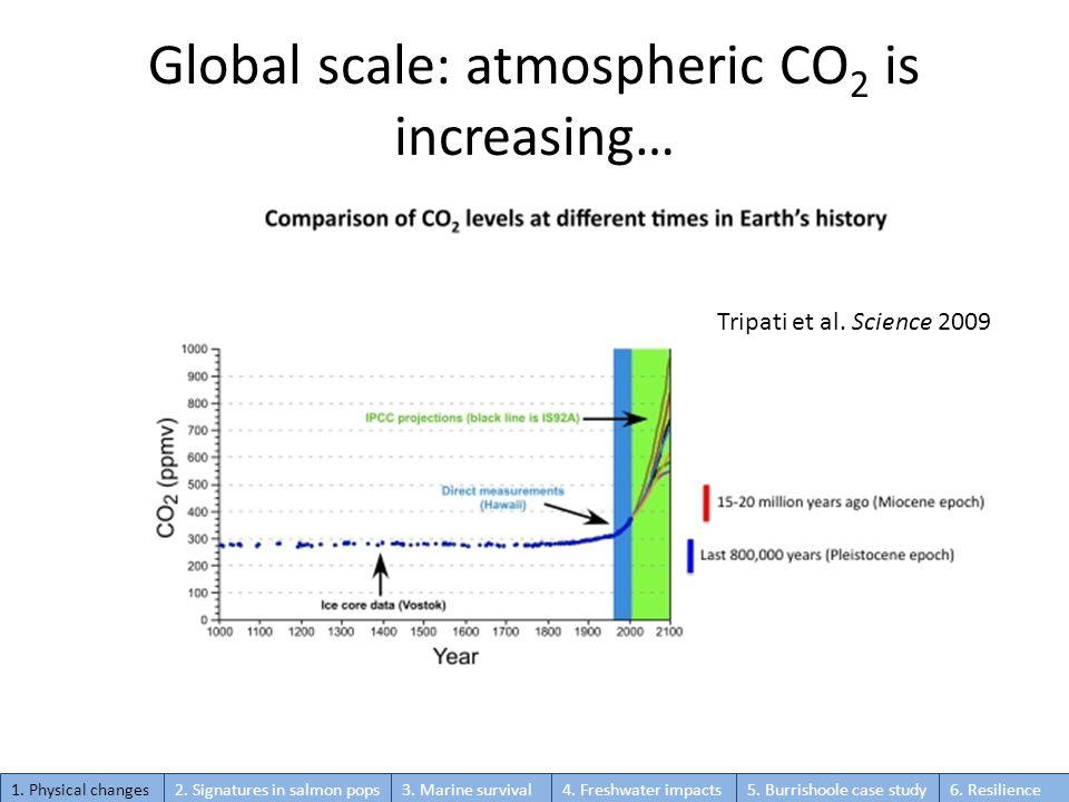 Global scale: atmospheric CO 2 is increasing… Tripati et al.