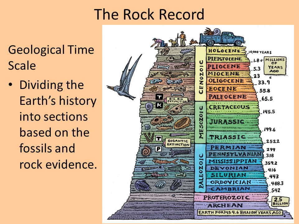The Rock Record Geological Time Scale Dividing the Earth's history into sections based on the fossils and rock evidence.
