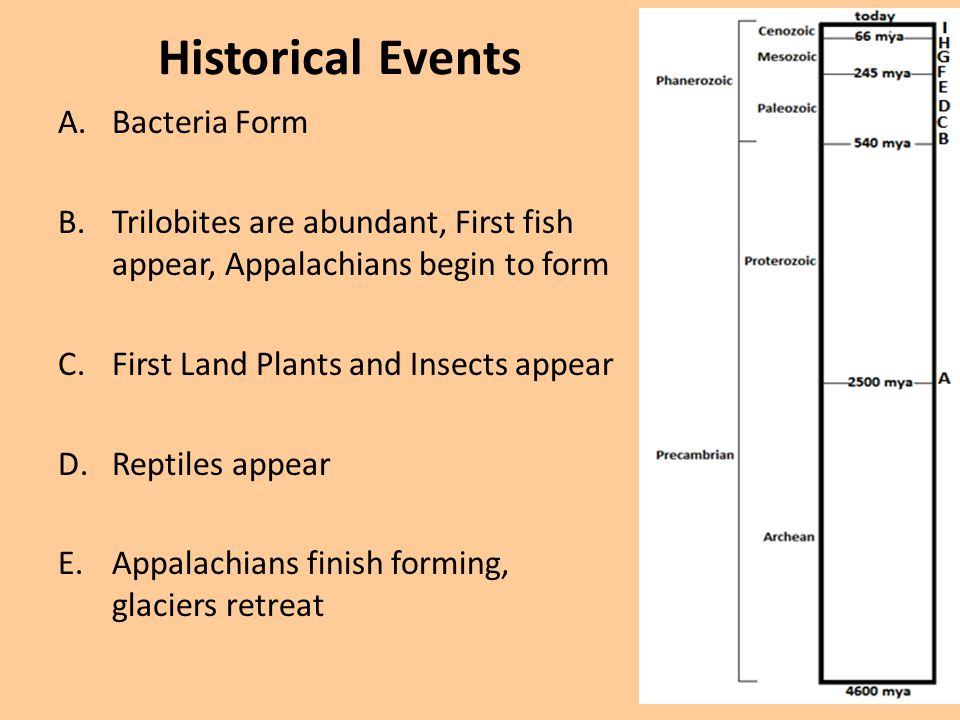 Historical Events A.Bacteria Form B.Trilobites are abundant, First fish appear, Appalachians begin to form C.First Land Plants and Insects appear D.Re