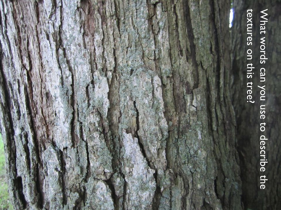 What words can you use to describe the textures on this tree?