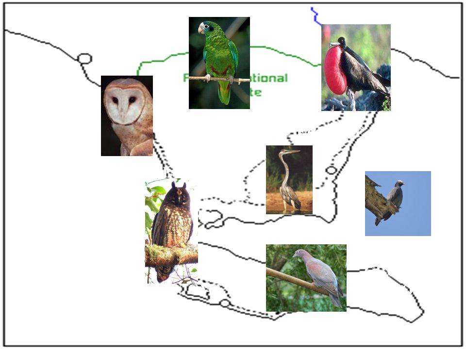 BEARN OWL FRIGATE BIRD HISPANIOLAN PARROT HERON STYGIAN OWL WHITE- CROWNED PIGEON PLAIN PIGEON