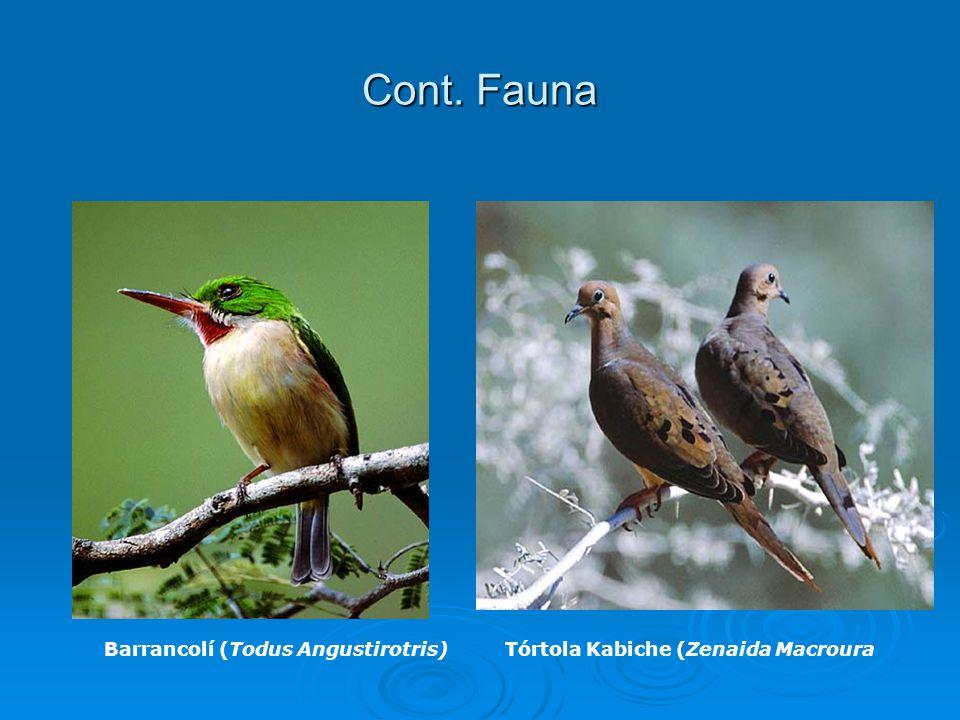 Cont. Fauna Barrancolí (Todus Angustirotris)Tórtola Kabiche (Zenaida Macroura