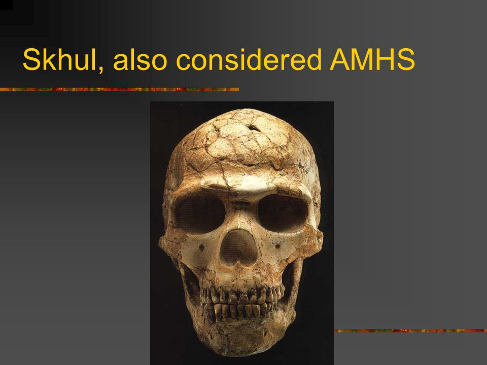 Skhul, also considered AMHS