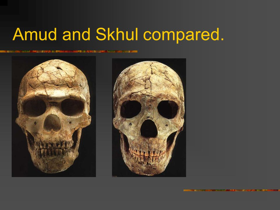 Amud and Skhul compared.