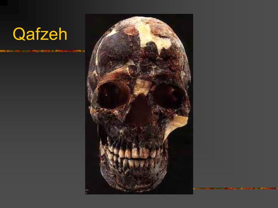 Qafzeh