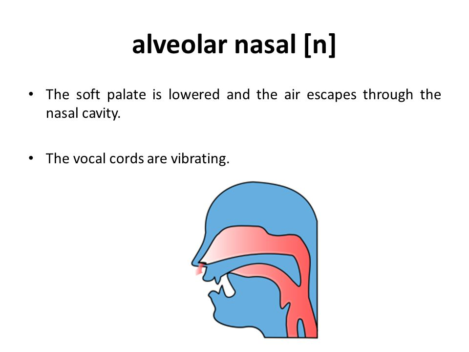 velar nasal [ŋ] The back of the tongue is pressed to the soft palate forming the complete obstruction.