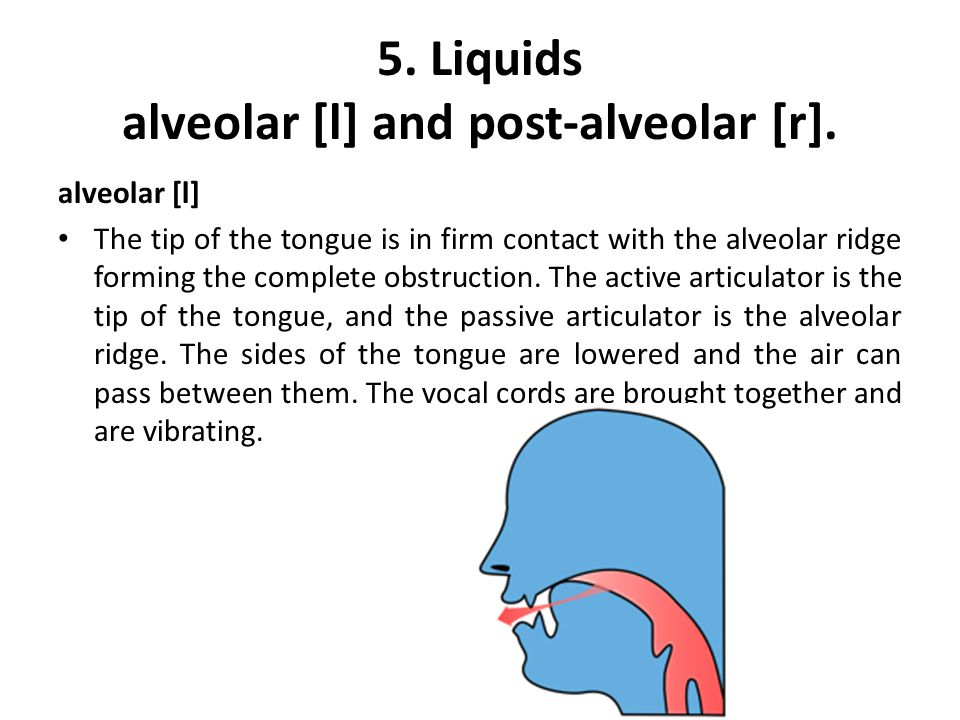 post-alveolar [r] The tip of the tongue is held in a position near to but not touching the back part of the alveolar ridge.