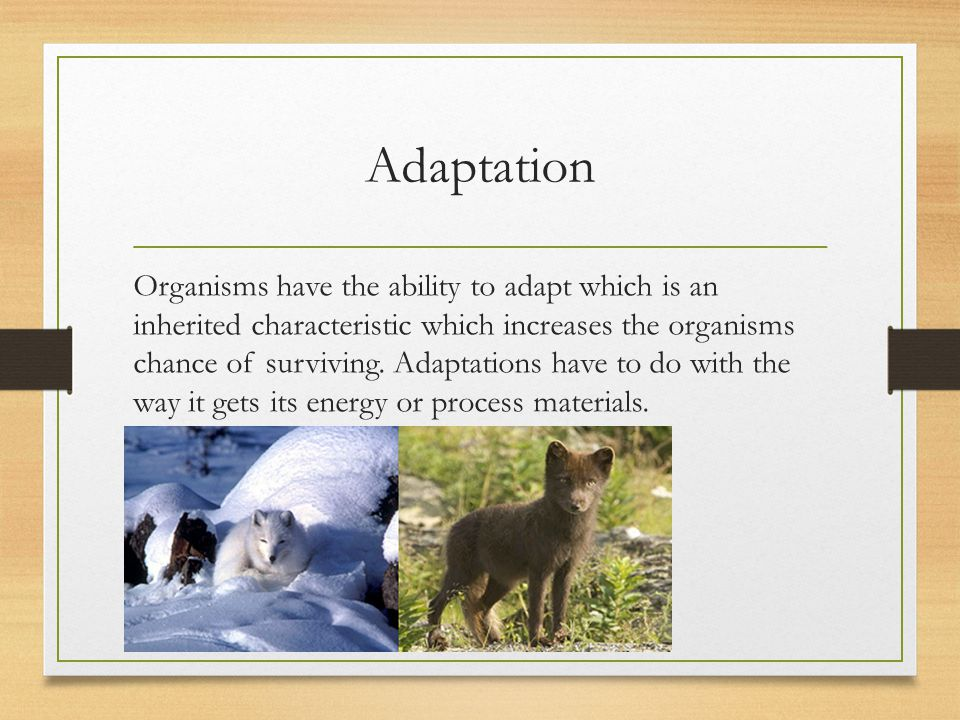 Populations Limiting Factors: A factor that controls the environment's growth, abundance, and distribution of population in an ecosystem.