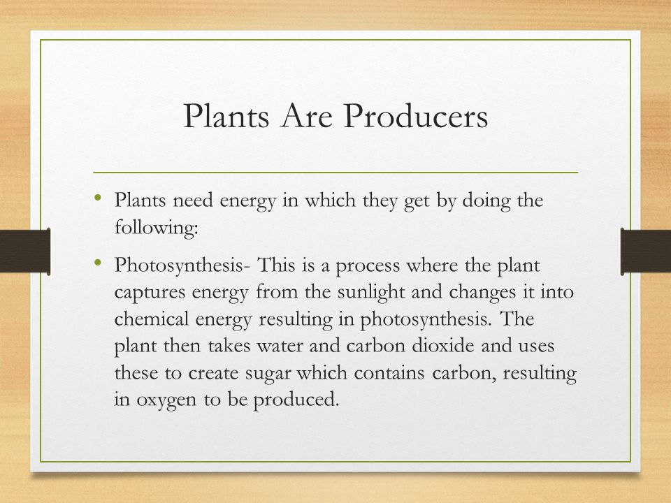 Plants Are Producers Plants need energy in which they get by doing the following: Photosynthesis- This is a process where the plant captures energy fr